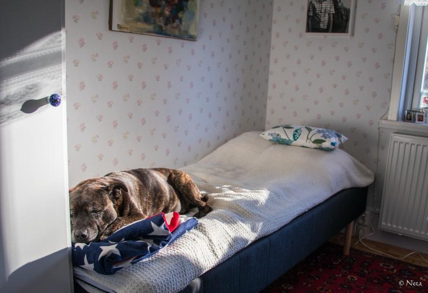 dino-sover-i-gastsangen