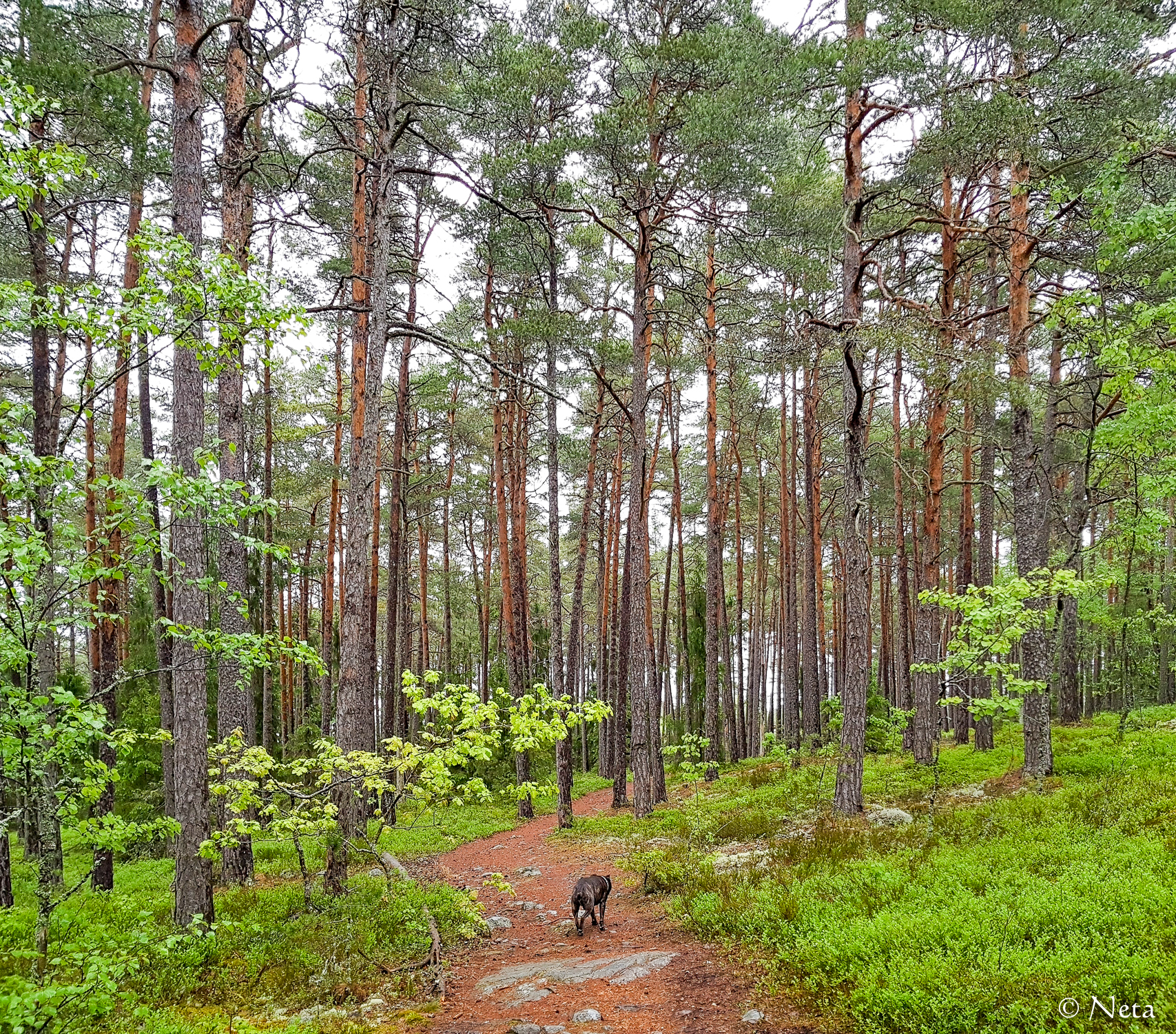 Många träd-2.jpg